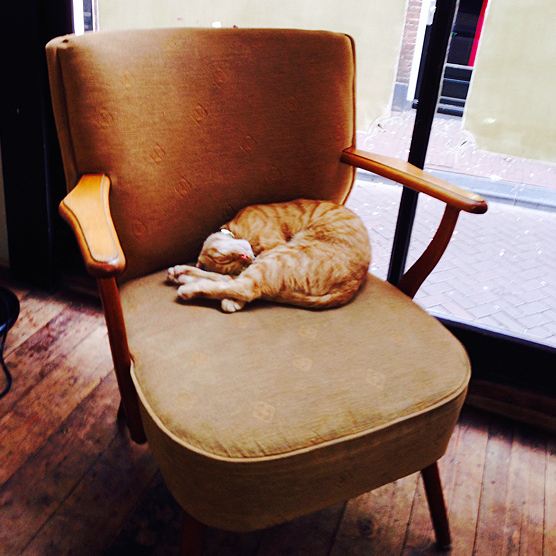 Sleeping kitty on Ercol chair in cafe.